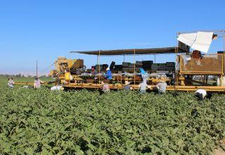 H-2A temporary agricultural visa program